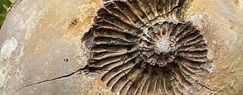 Fosil Nedir? Fosiller Bize Ne Anlatır?