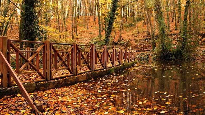1. Belgrad Ormanı