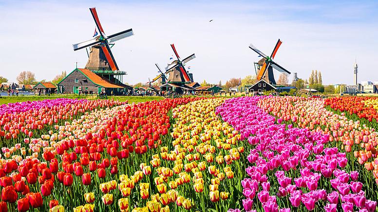 2. Hollanda