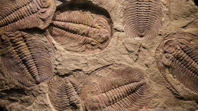 Fosil Türleri Nelerdir?