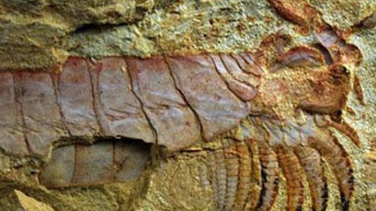 Fosiller Bizlere Ne Anlatır?