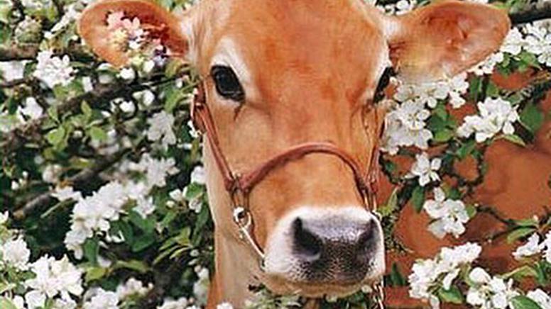 Vegan Nedir?