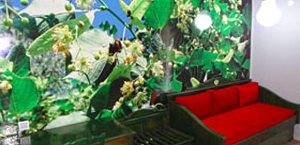 Filyos Ecopark Oda