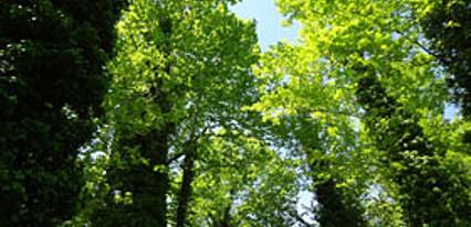 Filyos Ecopark Genel Görünüm