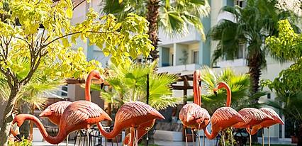 Süral Resort Genel Görünüm
