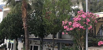Zeus Turunc Hotel Genel Görünüm