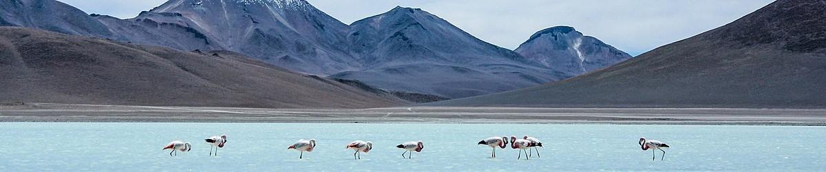 Bolivya Turları