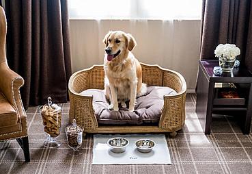 Köpek Kabul Eden Oteller