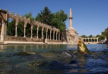 Mardin - Şanlıurfa