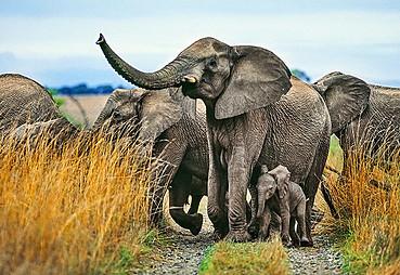 Safari (Pilanespark) - Johannesburg