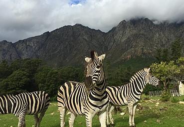 Güney Afrika & Safari Turu
