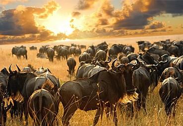Masai Mara – Nairobi