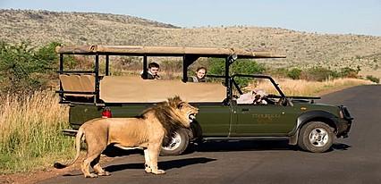 Güney Afrika & Safari Turu Genel