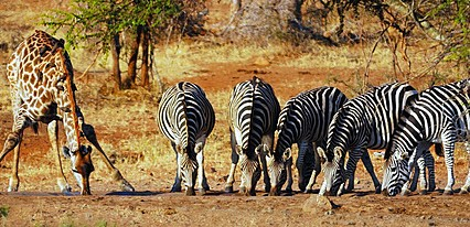 Güney Afrika Turu Genel