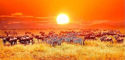 Kenya - Zanzibar Turu Genel