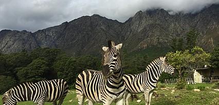 Vizesiz Güney Afrika Turu Genel
